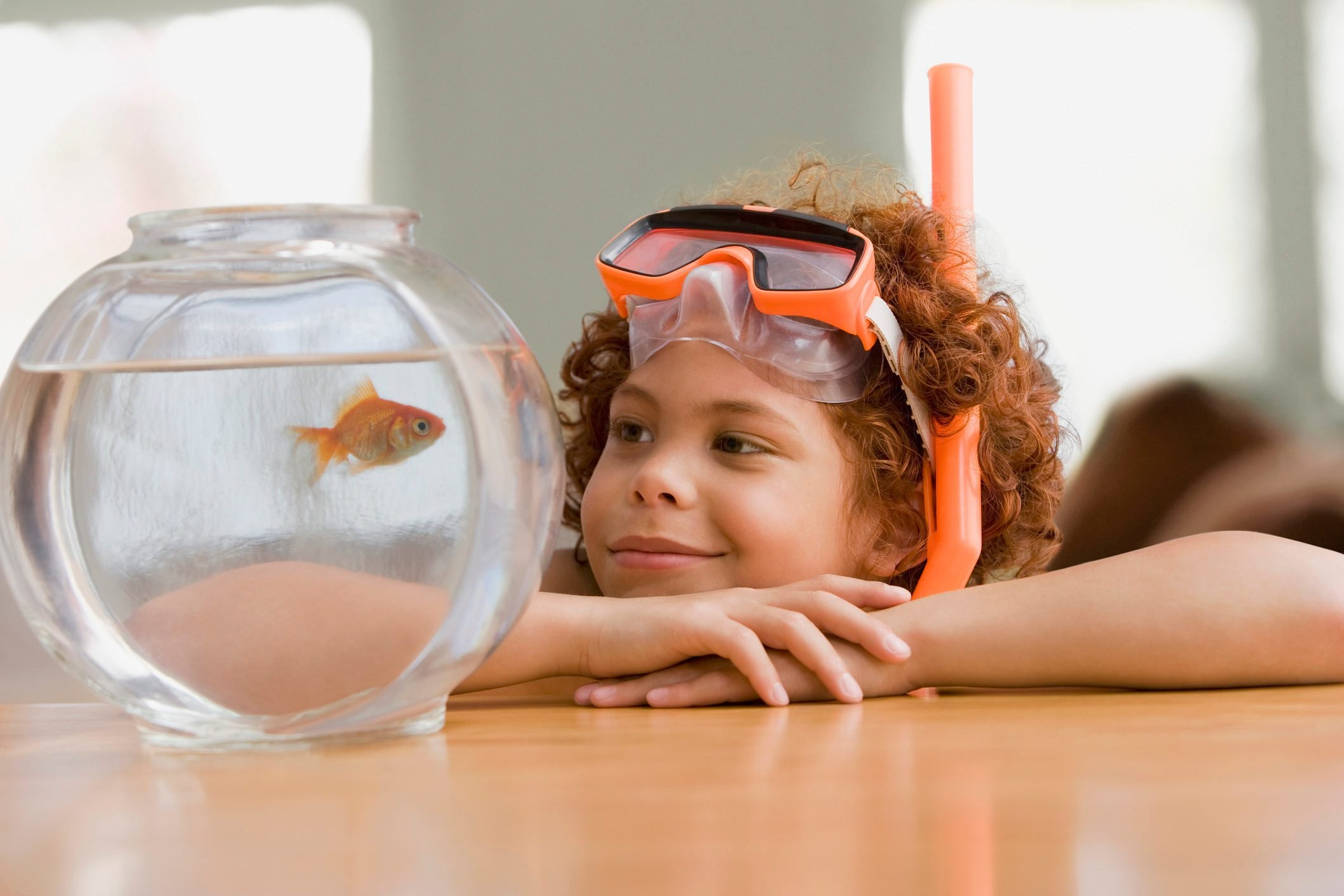 Mixed Race boy looking at fish in bowl