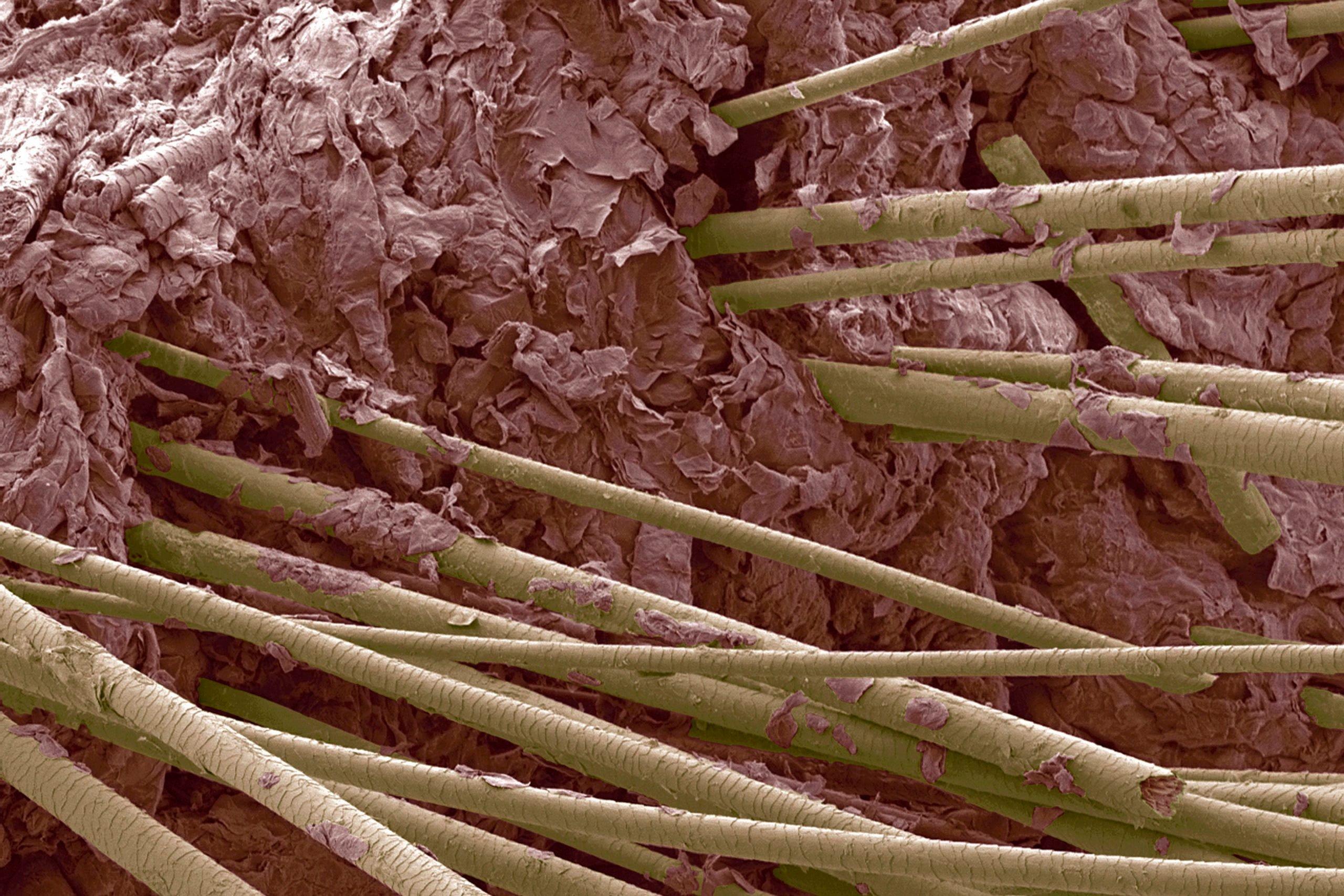 Human hair, close-up
