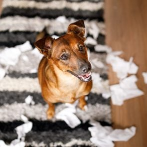 Dog proud of it's mess