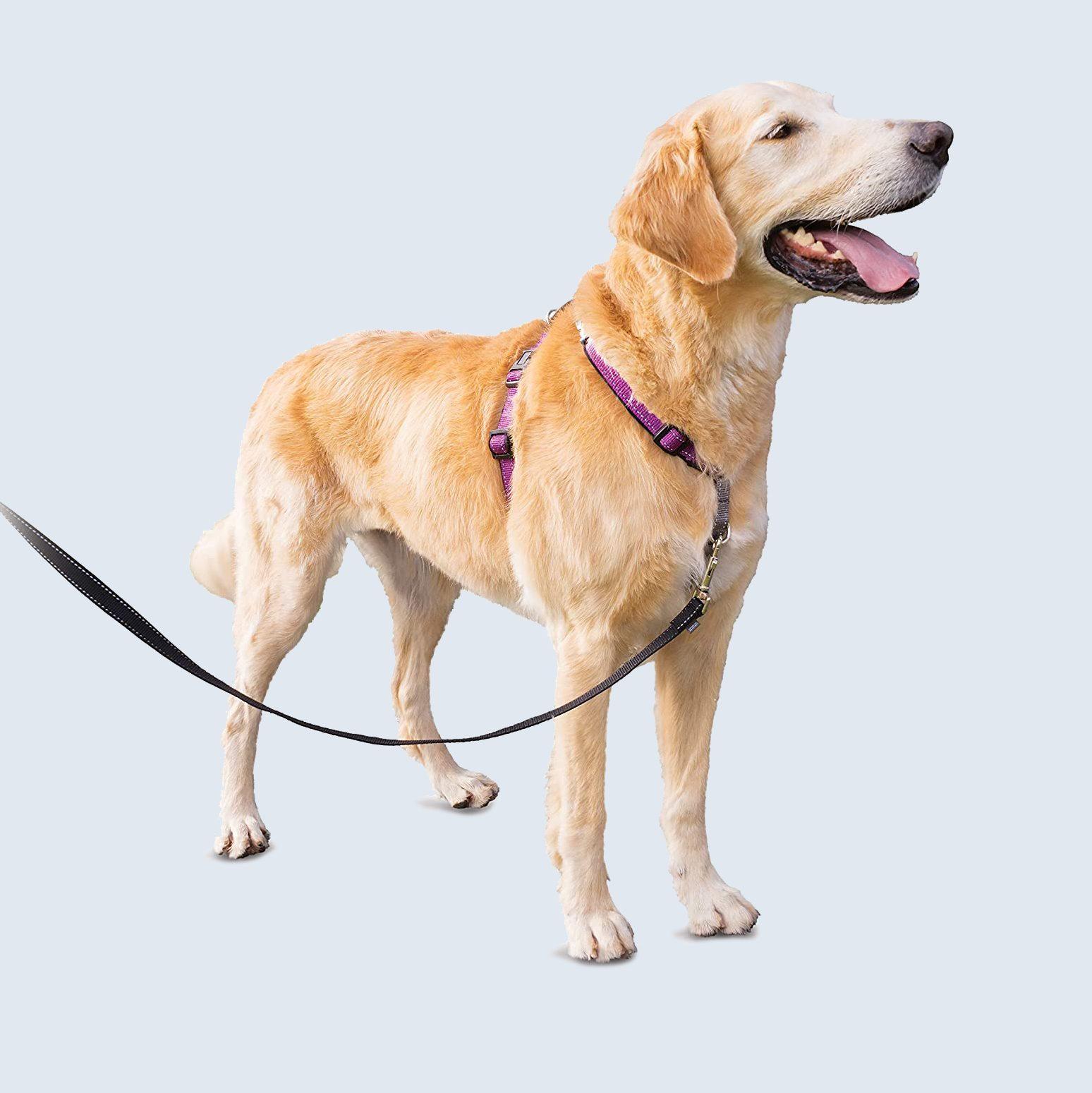 PetSafe 3 in 1 harness
