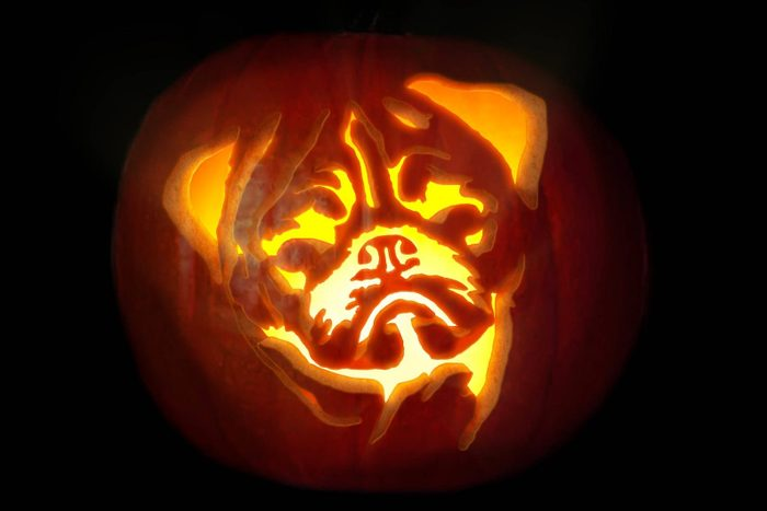 pug carved into a halloween pumpkin