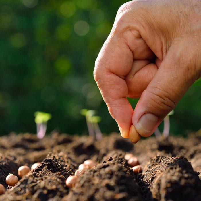planting seeds gardening
