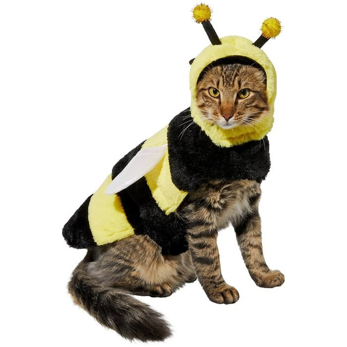 Bumble Bee Cat Costume