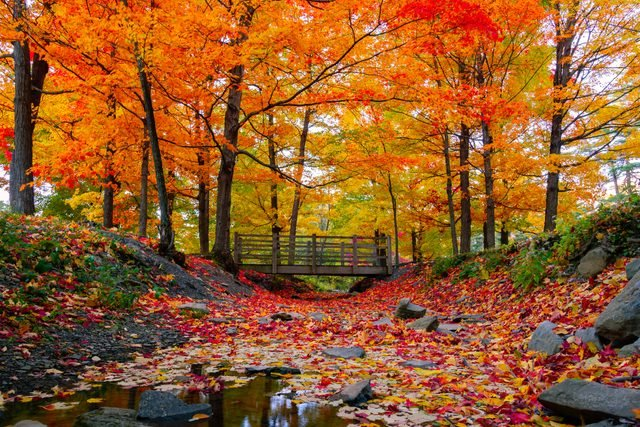 Fascinating Facts About Autumn | Reader's Digest