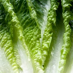 Romaine lettuce leaves