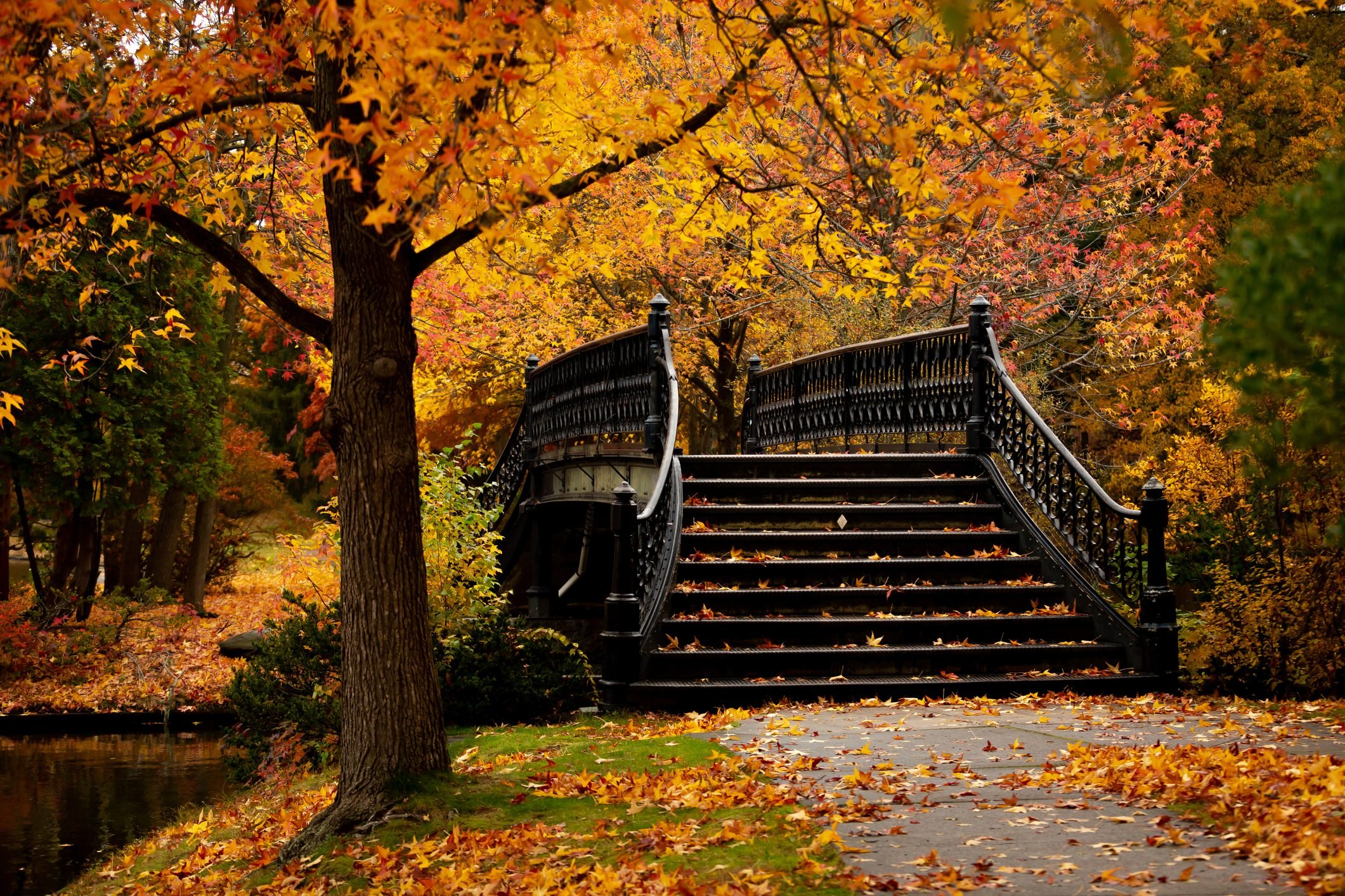 Staircase Amidst Trees In Forest During Autumn