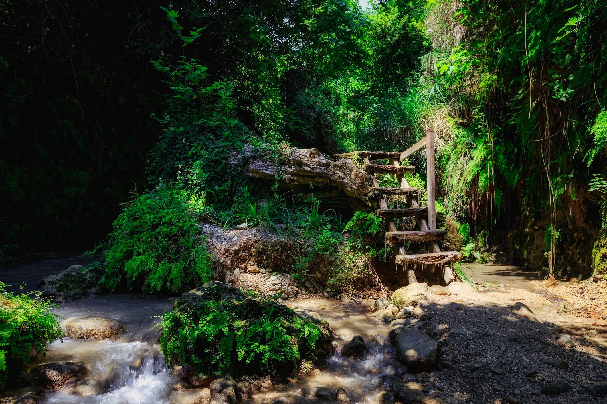 Fairytale forest landscape with wooden staircase