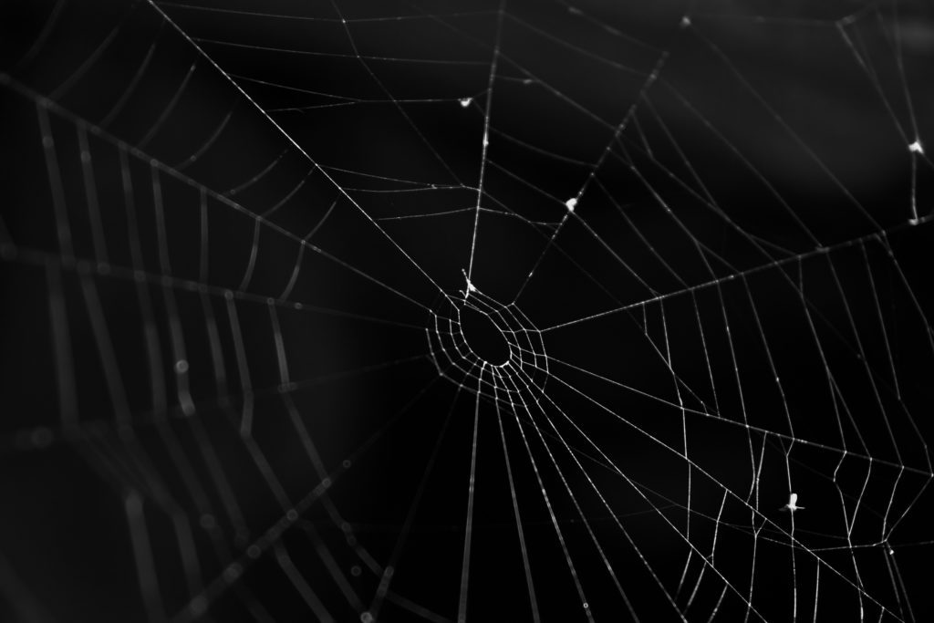 Spider web with something to eat, black background,monochrome, Romania