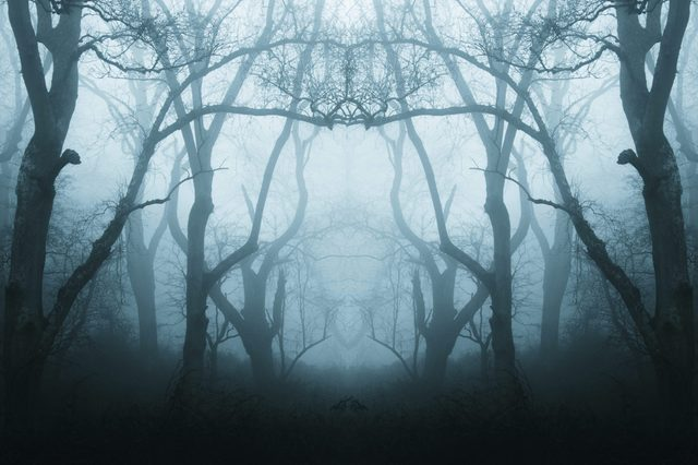 A mirrored, duplicate effect of a spooky, eerie forest in winter, with the trees silhouetted by fog. With a muted, blue edit.