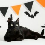 Black Cats and Halloween: What's True and What's Not