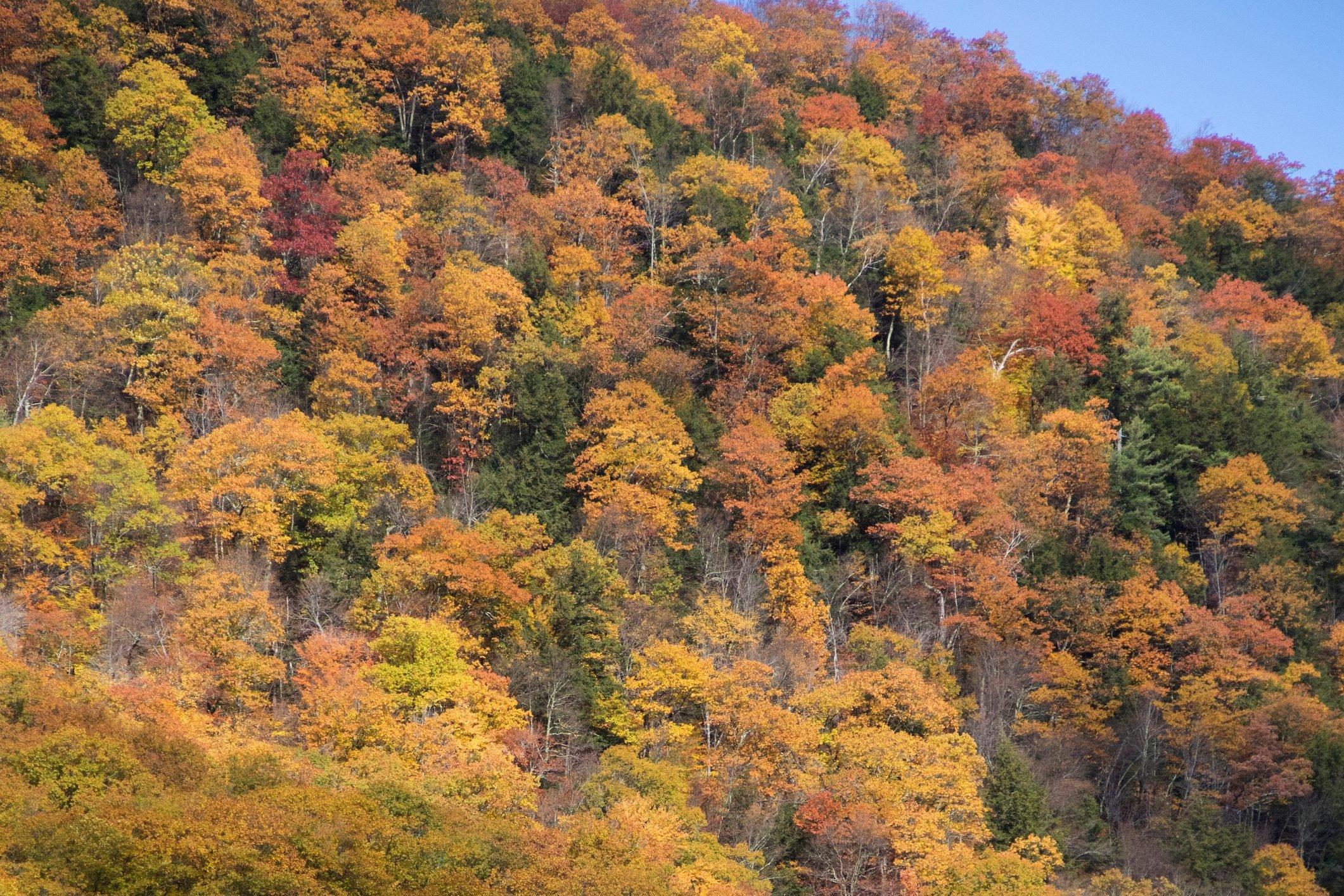 Autumn leaf color along the Mohawk Trail
