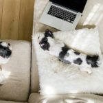 15 Lazy Dog Breeds That Are Expert Nappers