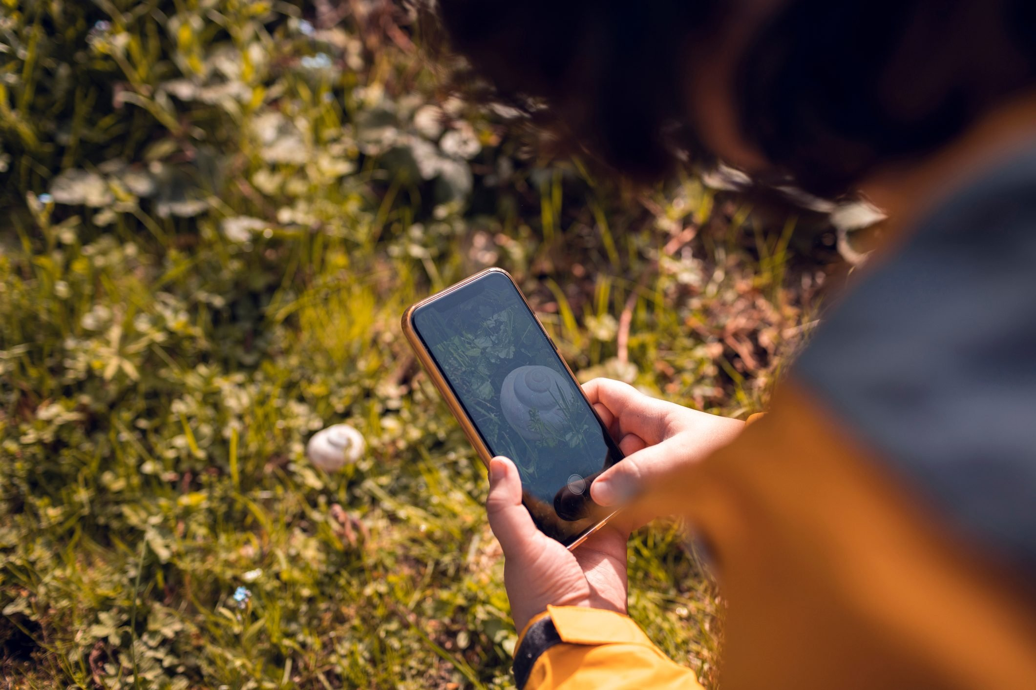 Little boy using a phone to identify plants