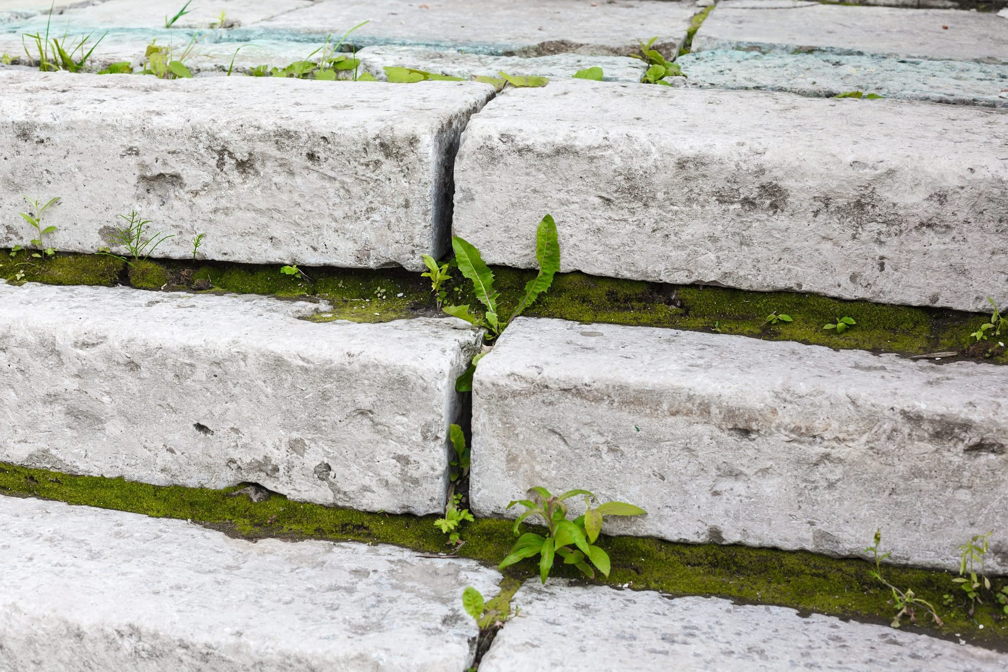 Antique white stone stair with green moss between steps closeup