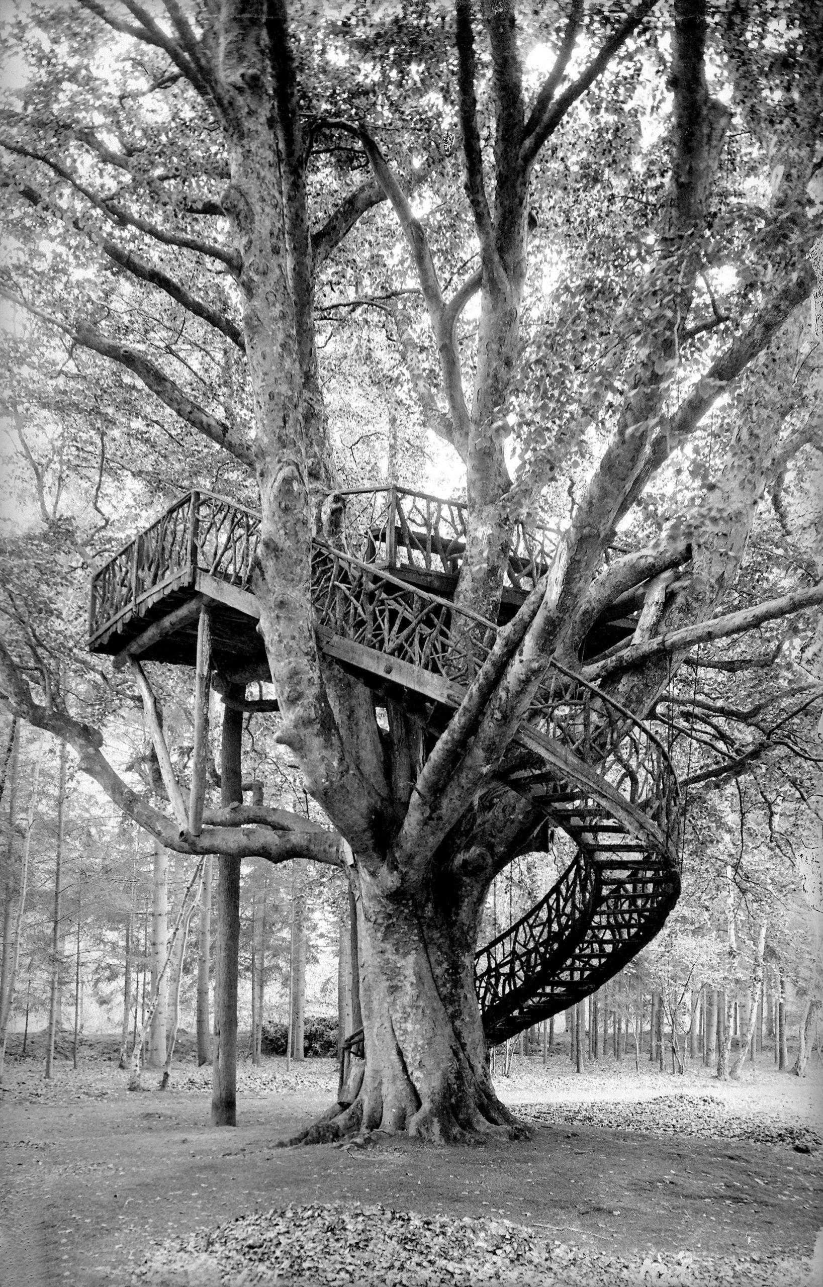 The Robinson tree near Bernay