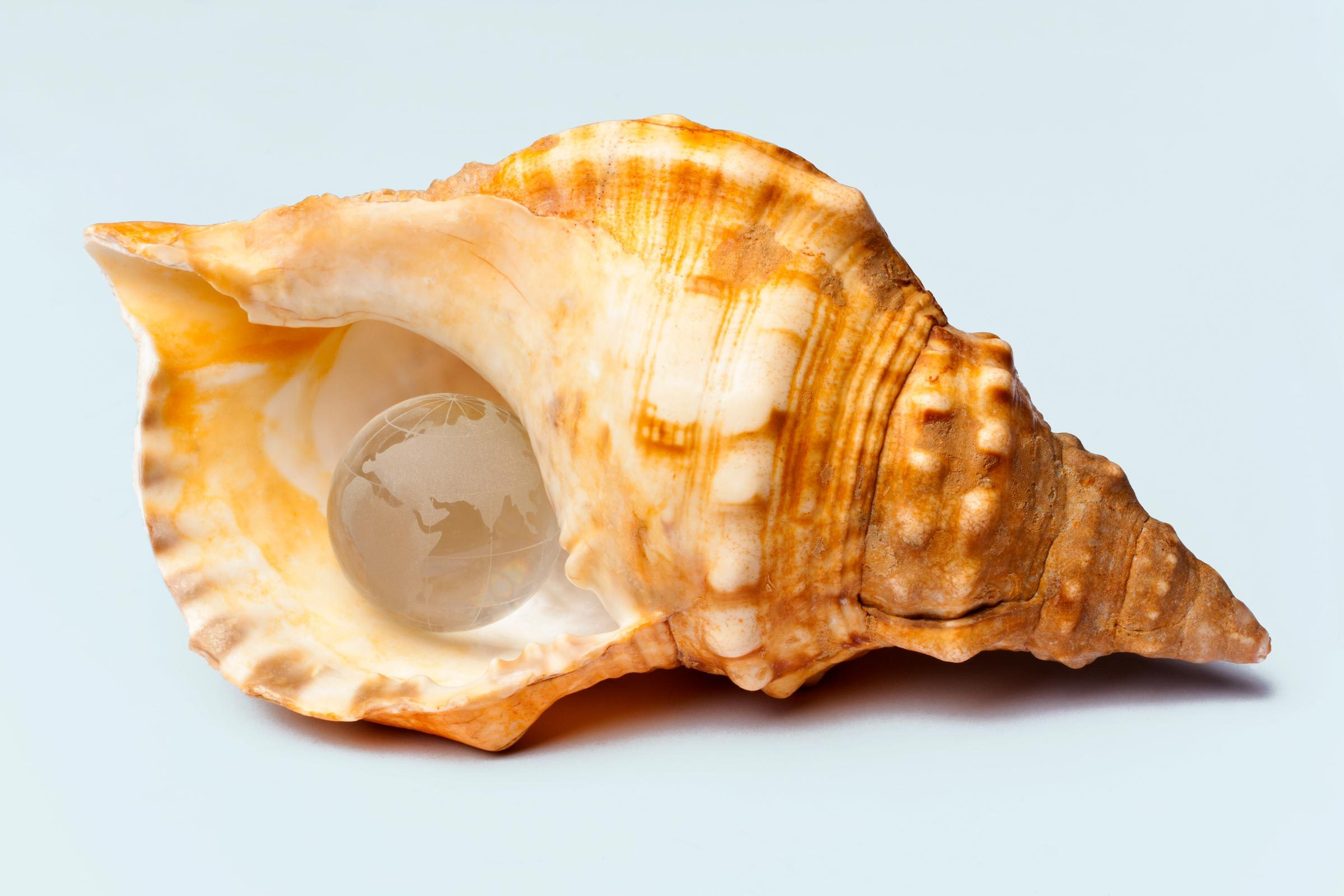 conch shell with clear globe