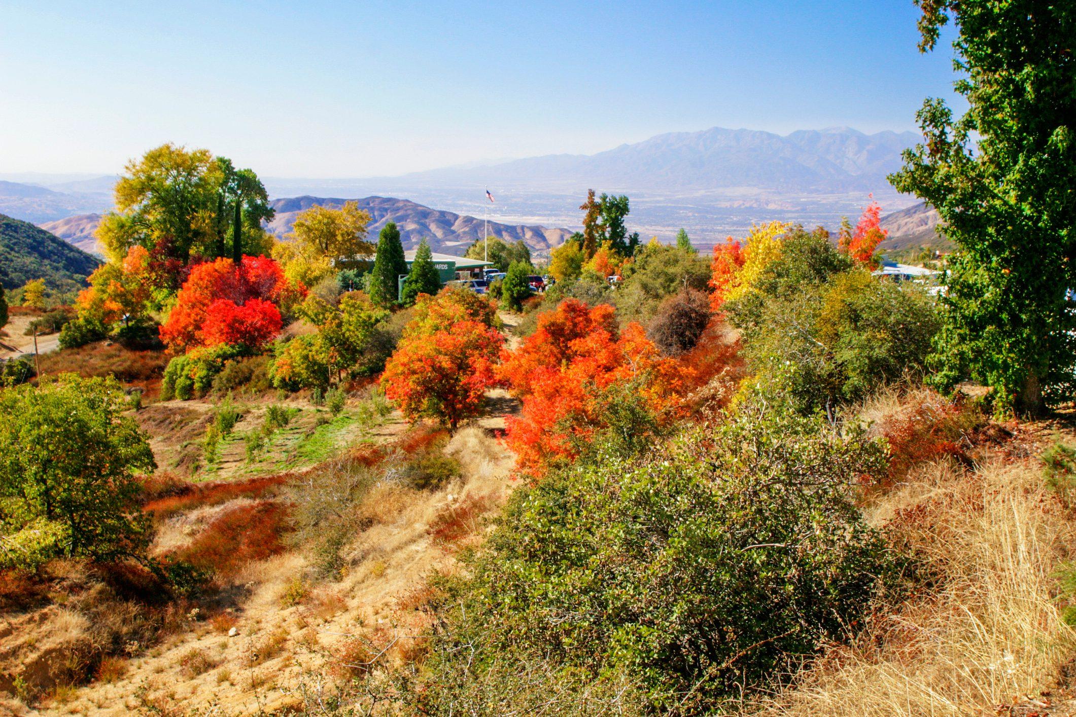 Oak Glen, California