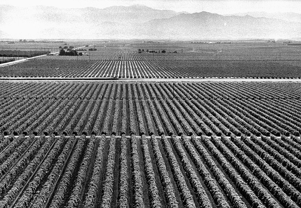 Aerial of Empty Grape Fields During Harvest