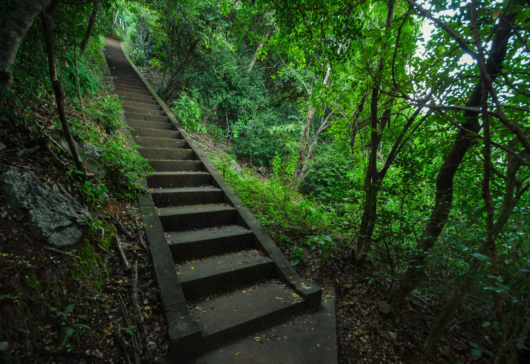 View Of Narrow Stairs Along Trees