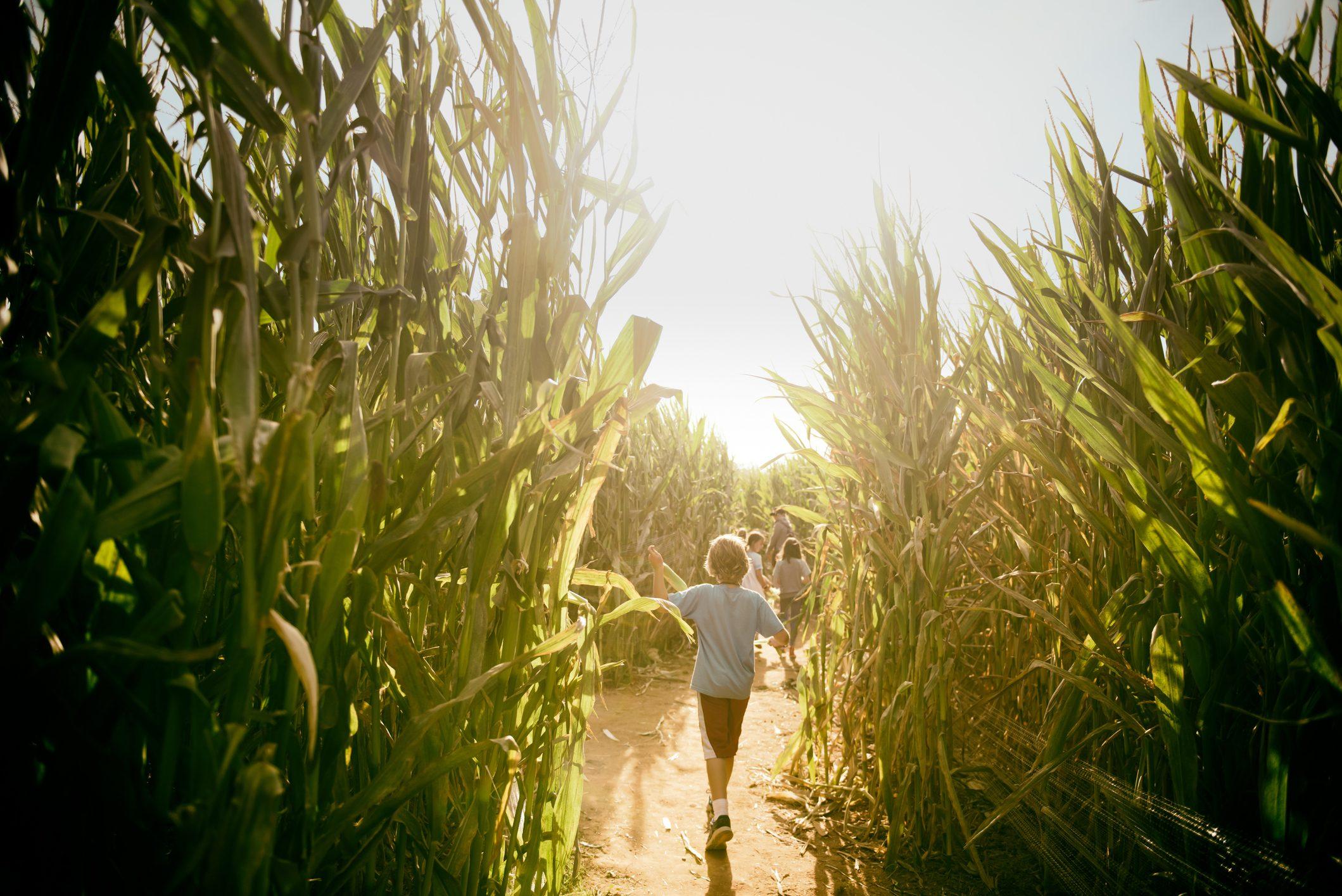 Running into October harvest