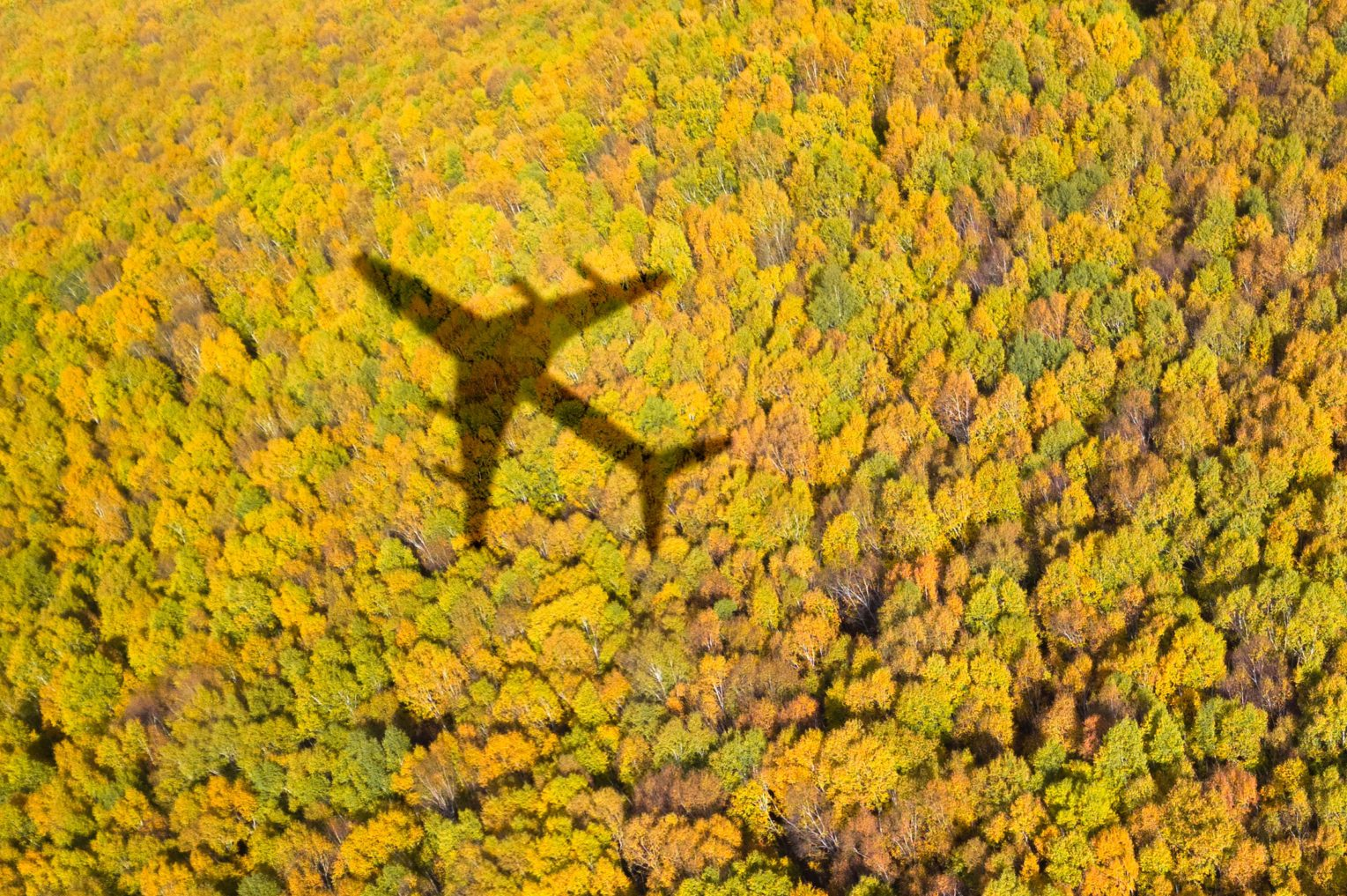forest with airplane shadow