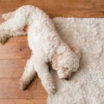 Why Do Dogs Circle Before Lying Down?