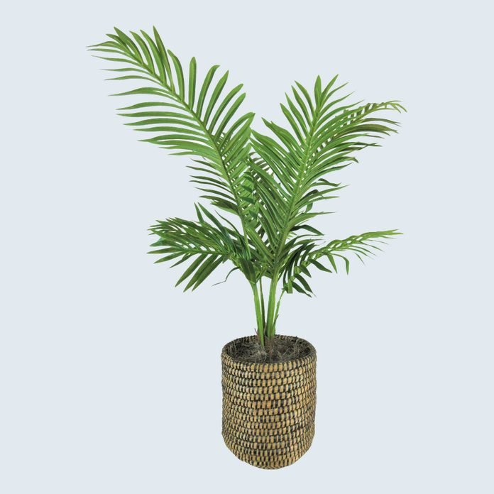 Palm Plant in Basket