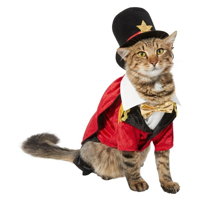 Ringmaster Cat Costume