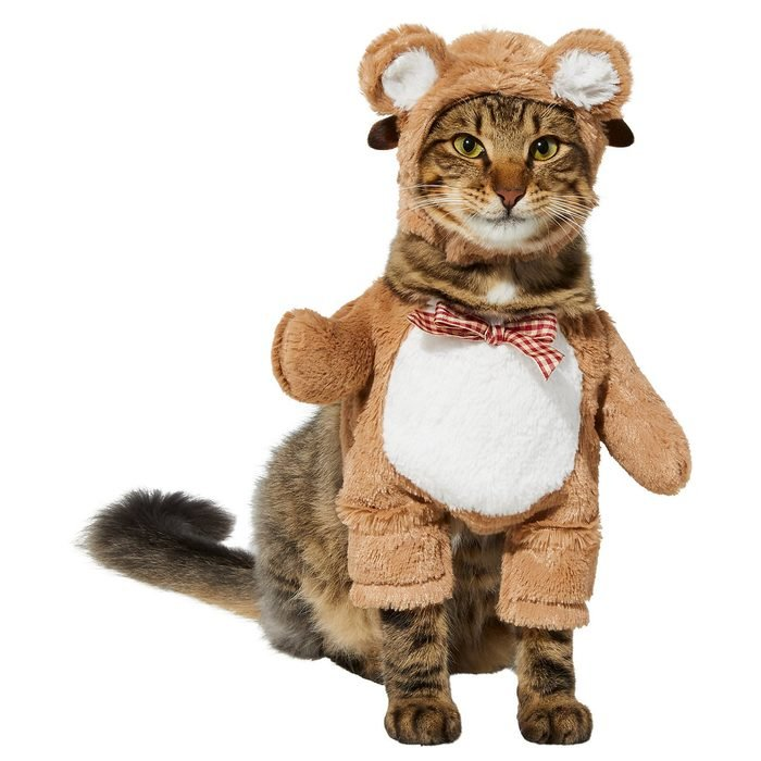 Teddy Bear Cat Costume