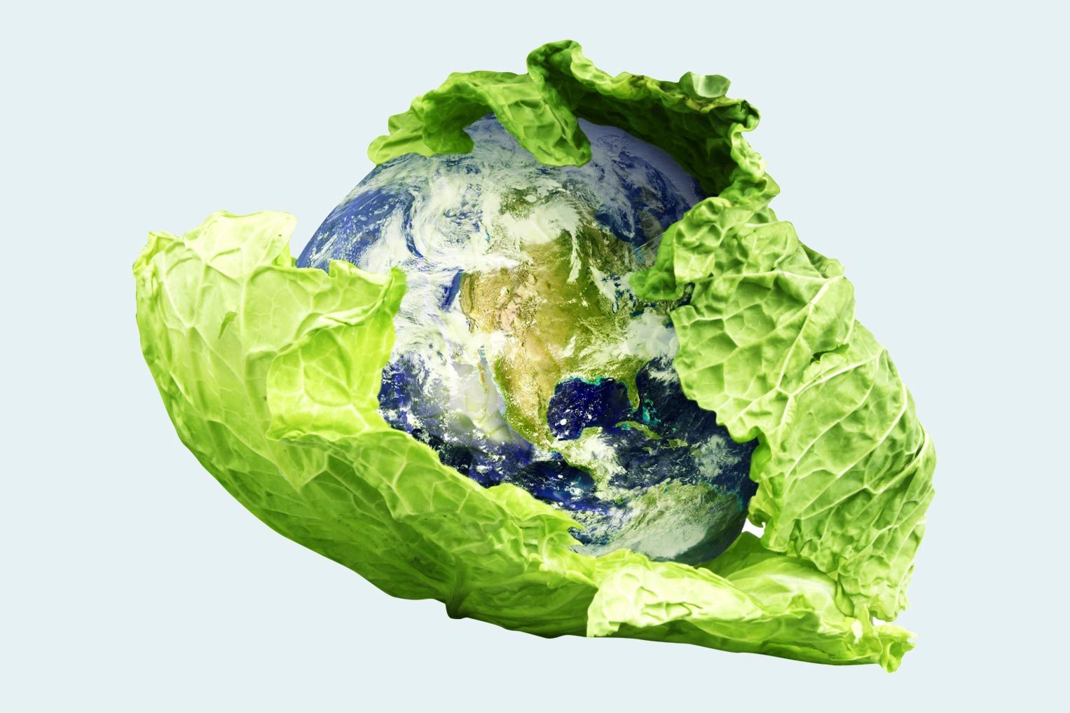 the earth wrapped in lettuce