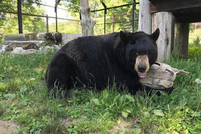 Bear Den Zoo And Petting Farm In Waterford Wisconsin