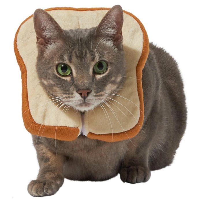 bread cat meme cat costume