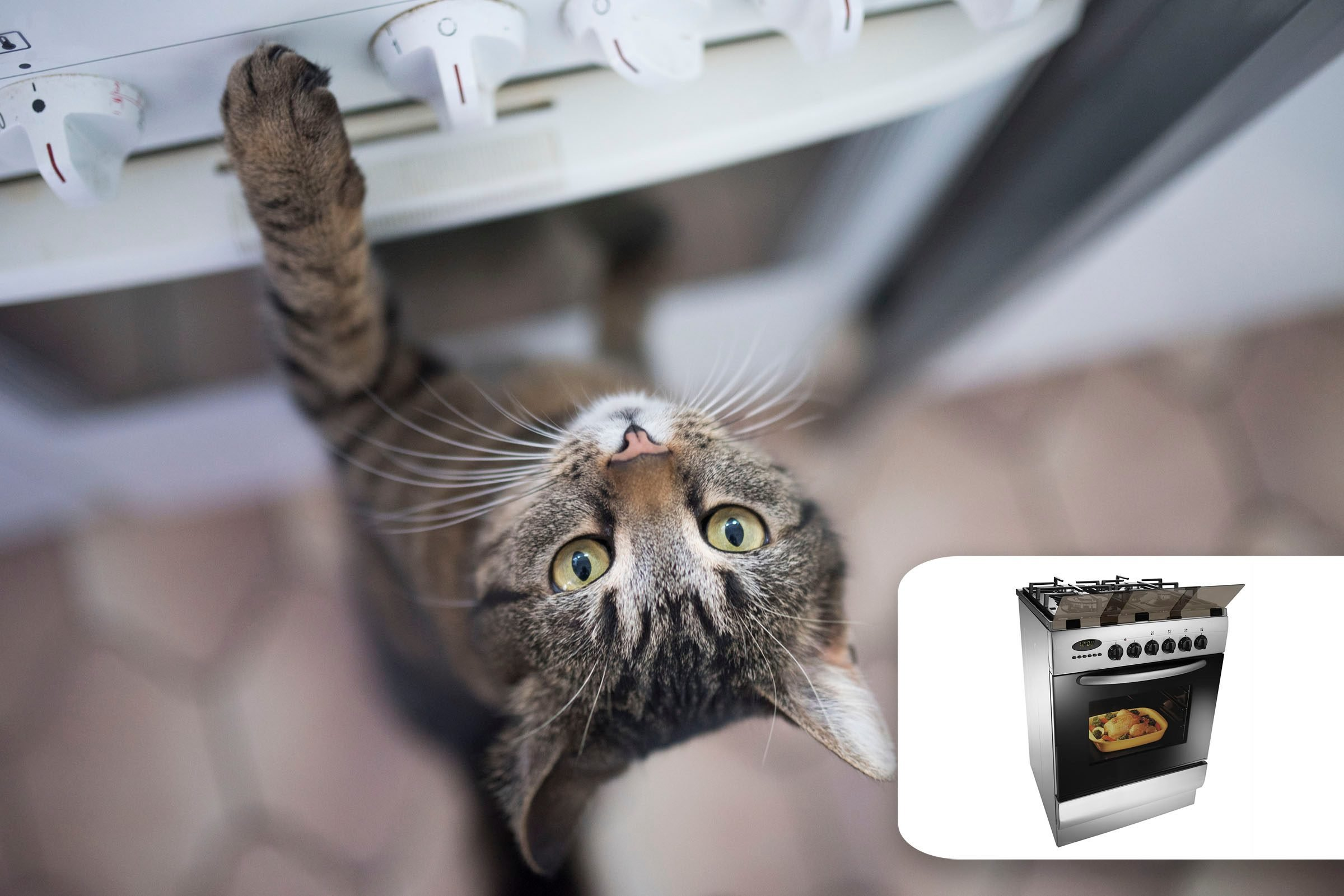 cat stove