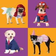 four dog costumes on orange and purple tile background