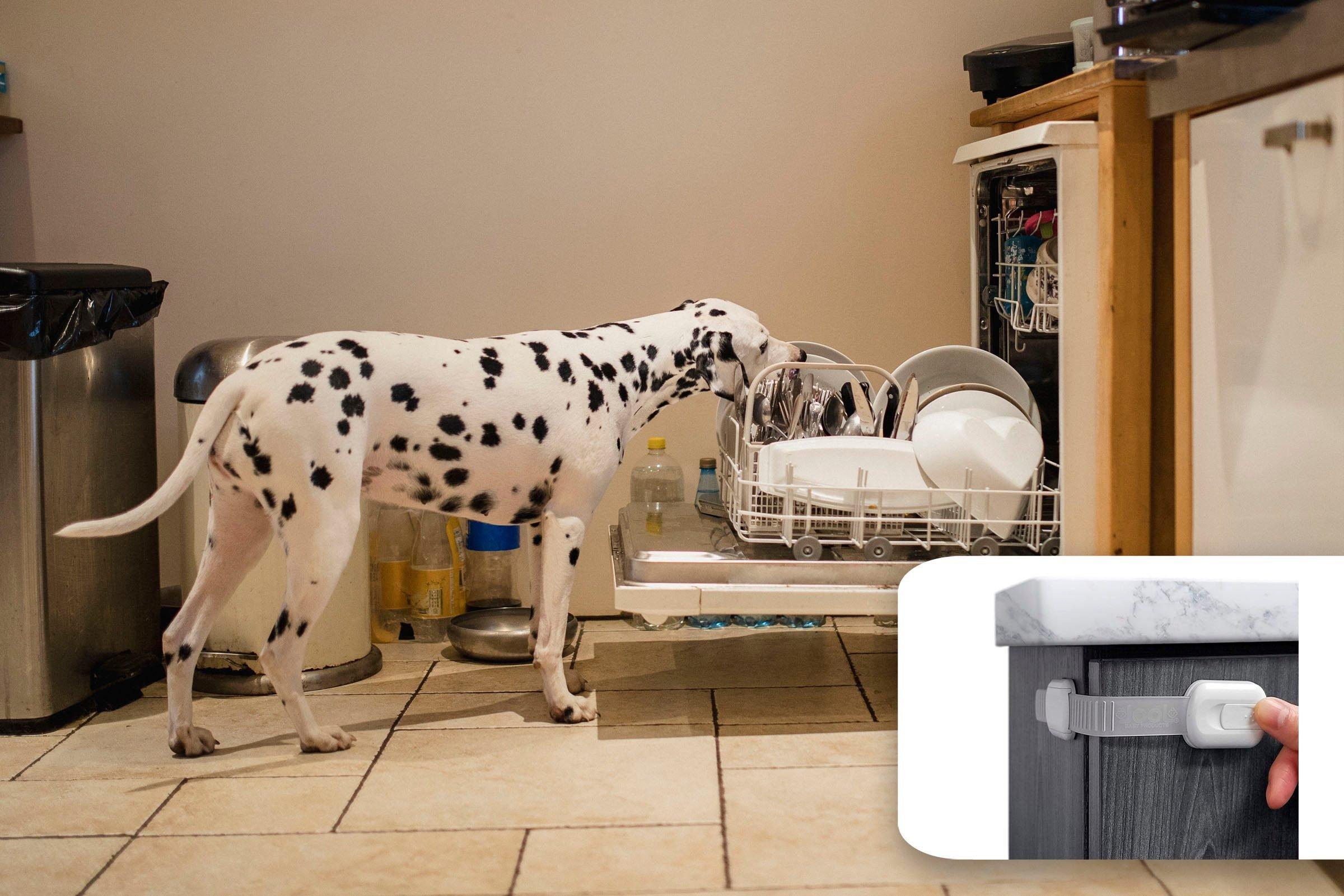 dog dishwasher