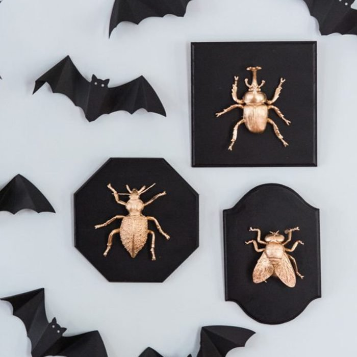 Golden Insect Taxidermy Plates Via Thesweetestoccasion