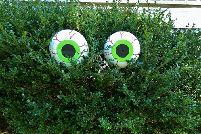 Hidden Eyes Halloween Decoration
