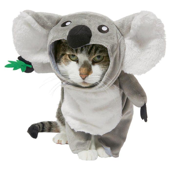koala bear cat costume