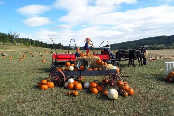 Lil Harvesters Pumpkin Patch In Rapid City South Dakota