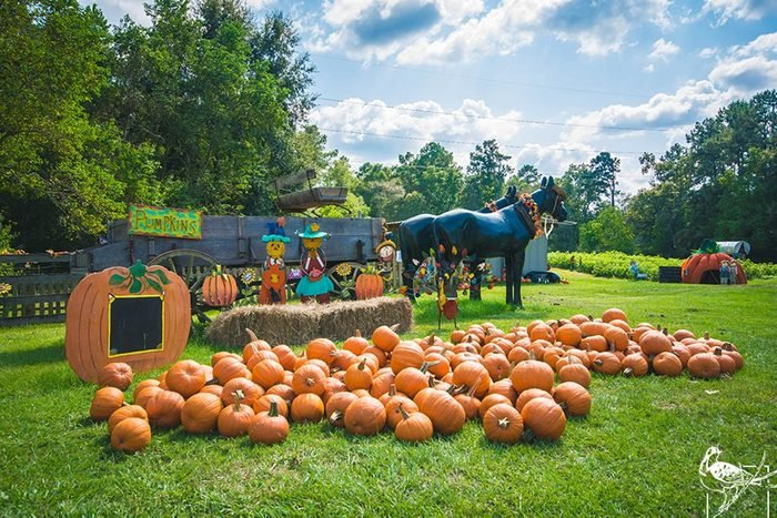 Mrs Heathers Pumpkin Patch In Hammond Louisiana