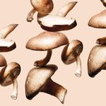 If Mushrooms Could Talk, Here's What They Would Tell You