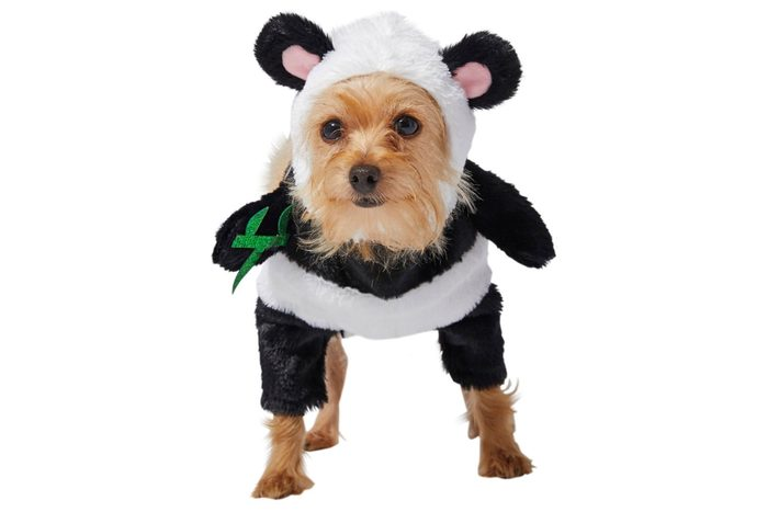 panda bear dog costume