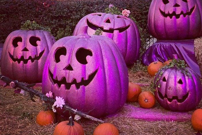 Purple Pumpkin trend
