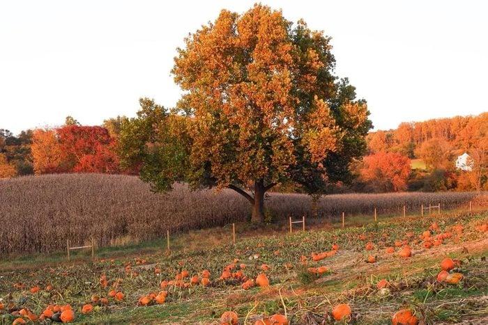 Ramseys Farm In Wilmington Delaware