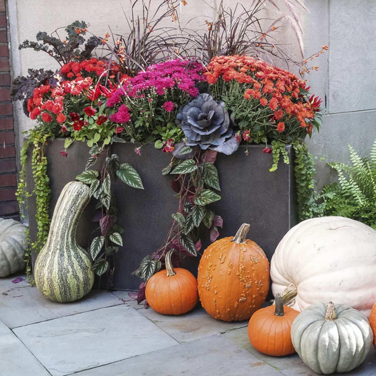 shutterstock_221815087 fall flower planter arrangement pumpkins squash