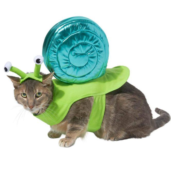 snail cat costume
