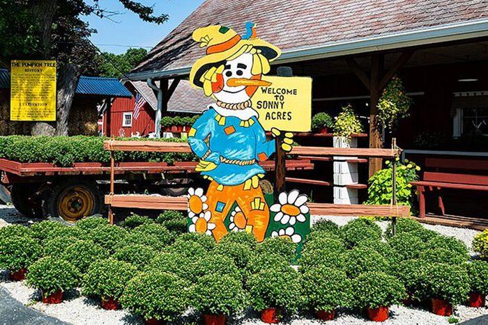 Sonny Acres Pumpkin Patch In West Chicago Illinois
