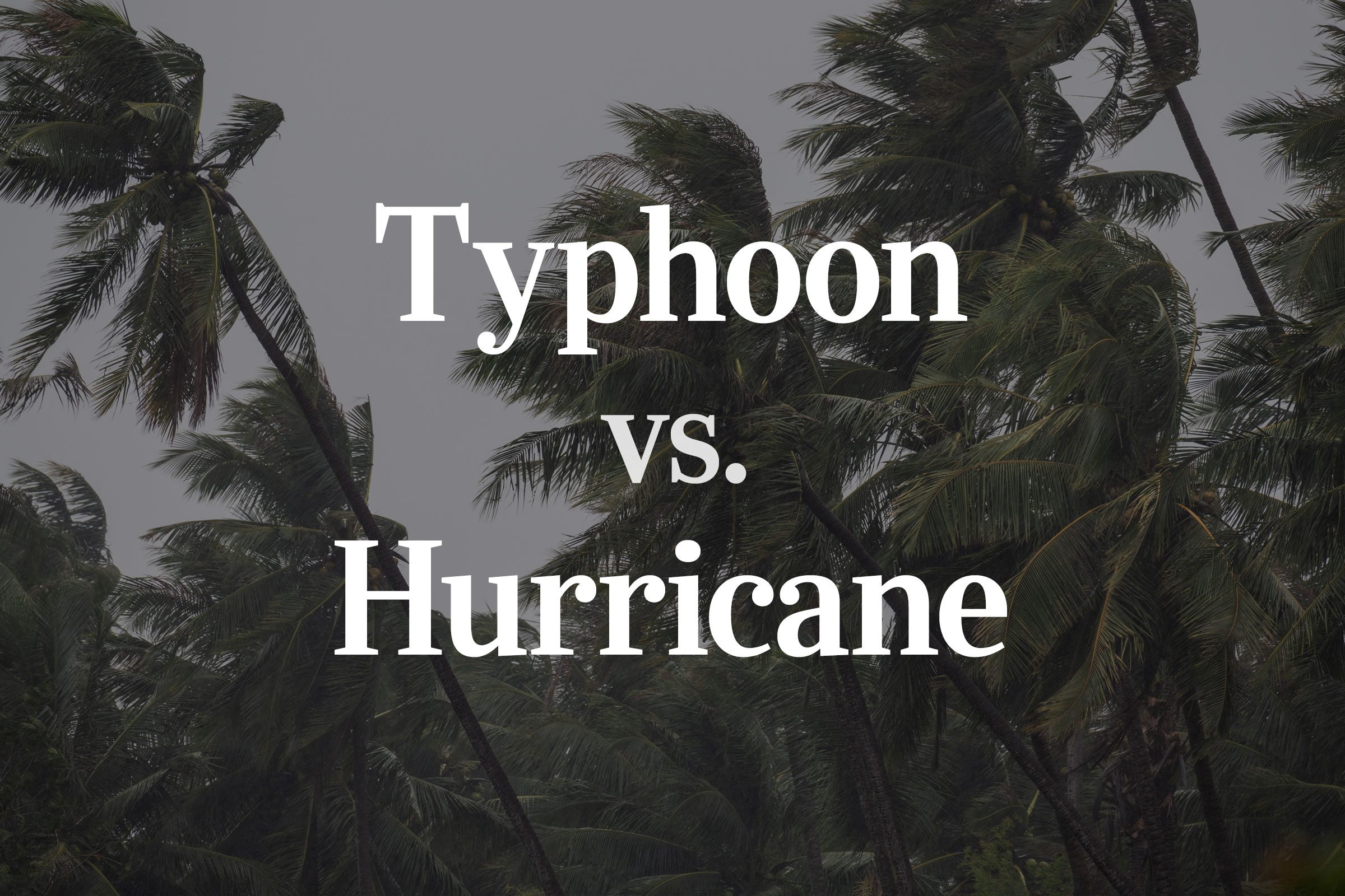 """""""Typhoon vs Hurricane"""" text over wind blown palm trees background"""