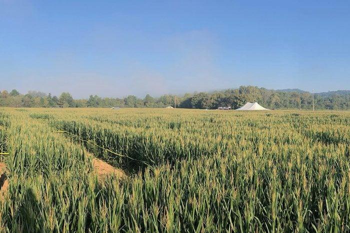 Uncle Shucks Corn Maze And Pumpkin Patch In Dawsonville Georgia Via Facebook