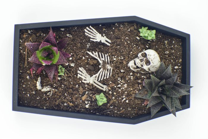 Coffin table planter